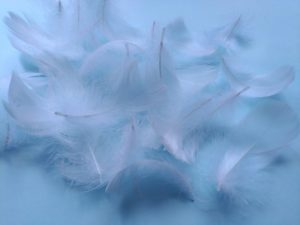 羽毛布団 クリーニング 水洗い