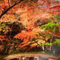 【実録】知らないと損する!六義園の紅葉の混雑を避けるコツ